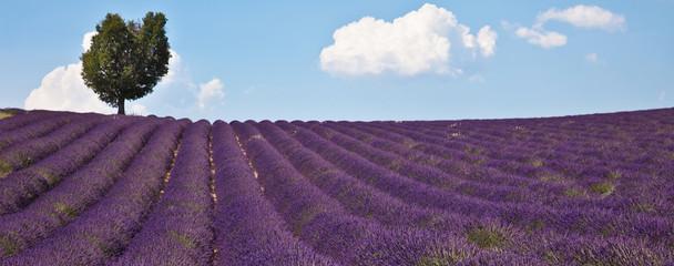 Türaufkleber Lavendel Arbre dans un champ de lavande