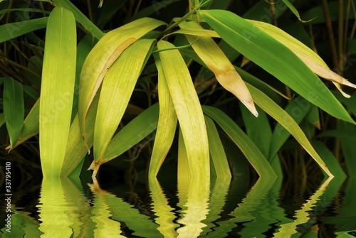 bambous et reflets dans l 39 eau photo libre de droits sur la banque d 39 images image. Black Bedroom Furniture Sets. Home Design Ideas