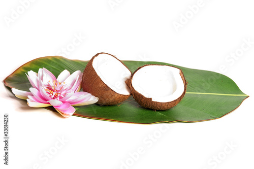 Noix de coco sur une feuille de palmier photo libre de - Palmier noix de coco ...