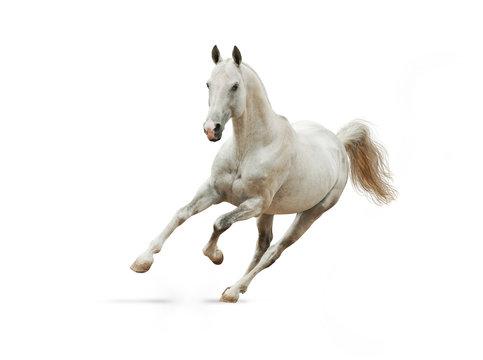 white horse on white