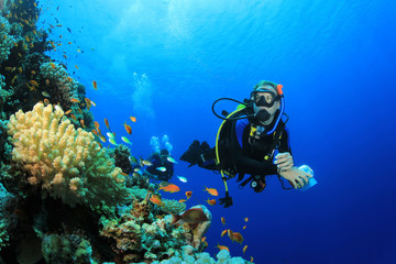 Wall Murals Diving Scuba Diver explores Coral Reef in Tropical Sea