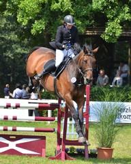 Pferd überspringt Hindernis