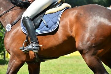 Pferd seitlich