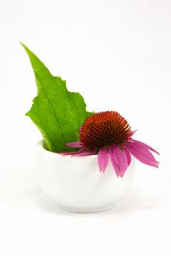 Echinacea purpurea und Mörser