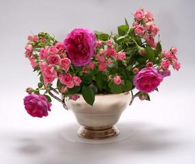 Obraz kwiaty róże - fototapety do salonu