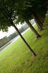 Wall Mural - Jardin, parc, Versailles, nature, vert, arbres, pelouse, allée