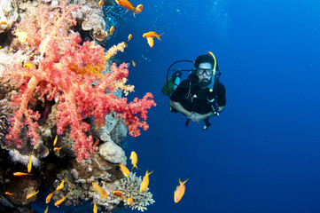 male scuba diver with red coral