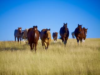 Pferde Montana