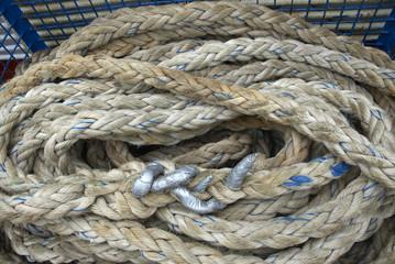 Cerca immagini acquatiche for Tartarughe acquatiche vendita