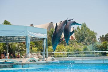 Fond de hotte en verre imprimé Dauphins dolphins