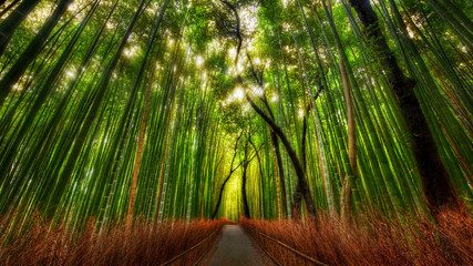 Photo sur Plexiglas Bamboo The Bamboo Forest