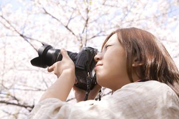 一眼レフカメラで桜を撮る女性