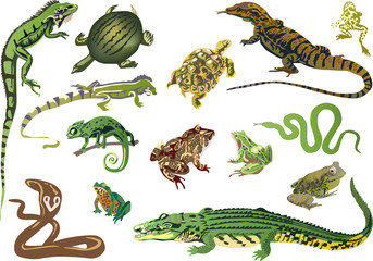 set of reptiles and amphibians isolated on white