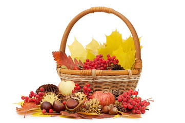 Autumn leaves and fruits isolated