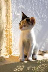 Wild city kitten