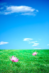 Cielo azzurro e prato verde con fiori