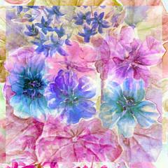 Flowers nasturtium