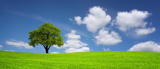 Tree on a meadow Fototapete