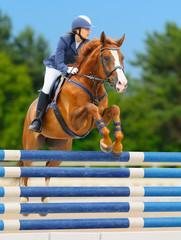 Fototapete - Equestrian sport: show jumping / young woman and sorrel stallion