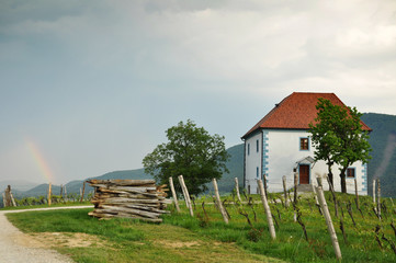 House in Vineyards. Škalce, Slovenia