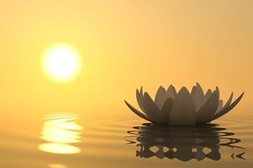 Fototapete - Zen flower lotus on sunset
