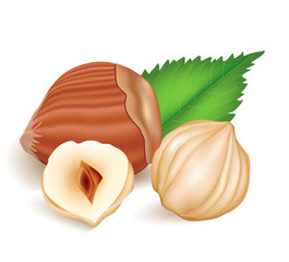 Photo-realistic vector illustration. Hazelnuts with leaves.