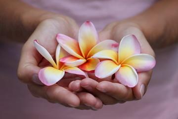 Handful of frangipanier's flowers