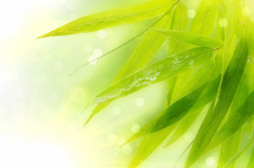 Wet bamboo leaves on white background.