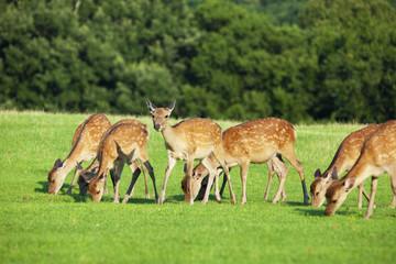 奈良県飛火野の鹿の群れ
