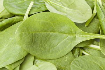A fresh green spinach leaf