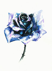 Blue rose watercolor painted