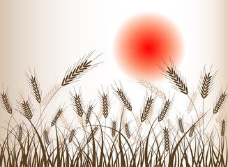 Àbstract wheat background, vector