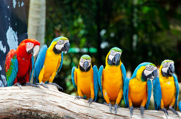colorful macaws sitting in a tree