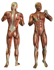 Wall Mural - Muskelaufbau Mann im Kämpfer Pose