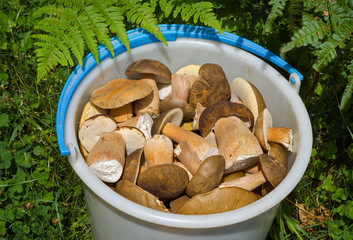 Bucket with mushrooms 15