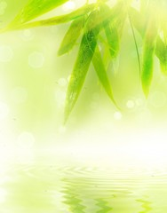 Wet bamboo leaves with reflection in water.