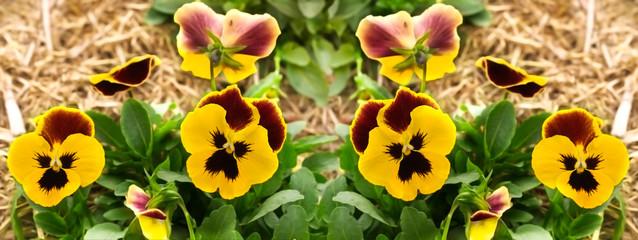 gele viooltje bloemen tuin grens