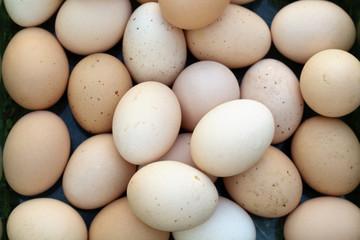 Świeże jaja kurze
