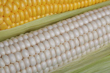 corn, food, cob