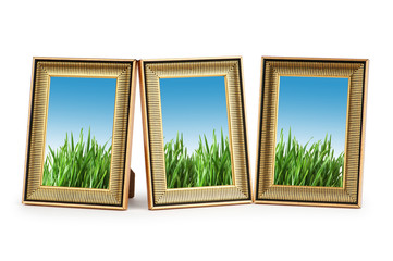 Green grass in the picture frames