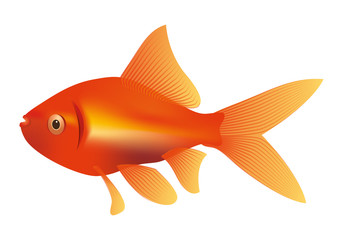 goldfish illustration