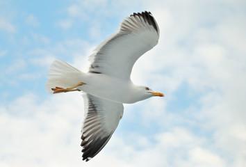 A seagull soaring in a blue sky