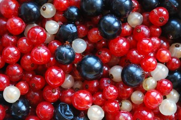 Fruits des Bois (fruits rouges cassis groseilles myrtilles)