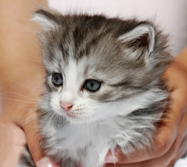 Kitten in hands.