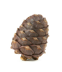 Cedar cone on a white background