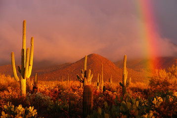 Poster de jardin Desert de sable Rainbow sunset at the Saguaro National Park, Arizona, USA