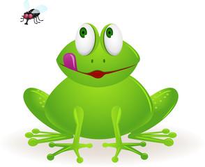 frog staring at fly