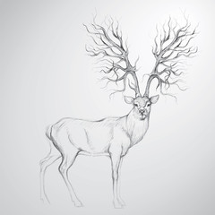 Deer with Antler like tree / Realistic sketch