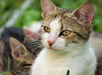 Cute house cat