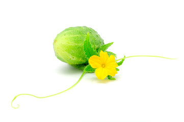 Cucumber with Green Leaf, Flower, and Tendril Isolated on White